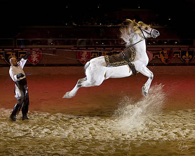 Photograph - Leaping Lipizzaner by Endre Balogh
