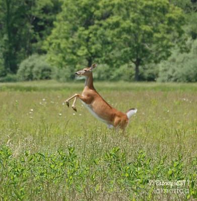 Leaping White-tail Deer Art Print