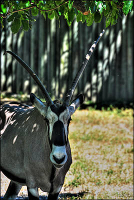 Keith Richards - Leave Me A ROAN ANTELOPE  by Michael Frank Jr