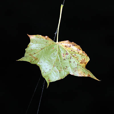 Photograph - Leaves - 0002 by S and S Photo