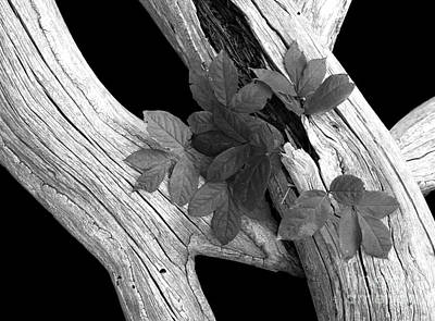 Firefighter Patents - Leaves and Driftwood BW by Mike Nellums