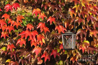 Leaves And Lantern Art Print by Katja Zuske