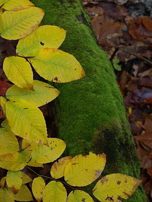 Autum Photograph - Leaves And Moss by Allan Wrona