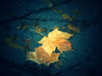 Photograph - Leaves And Reflections by Beth Akerman