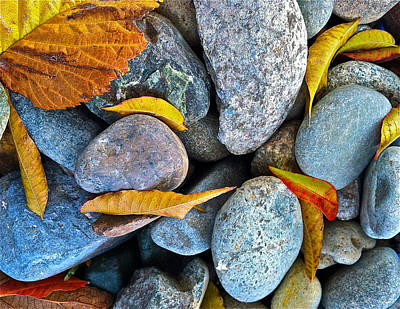 Leaves And Rocks Art Print by Bill Owen