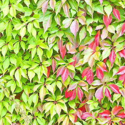 Leaves Background Art Print by Tom Gowanlock