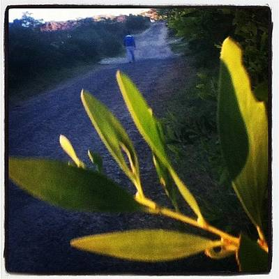 Pathway Photograph - #leaves #bush #pathway #pretty #beach by Pictures 🌺 Photos 📷