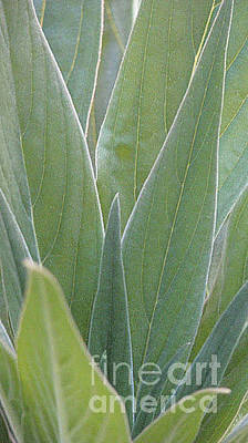 Photograph - Leaves Detail by Morgan Wright