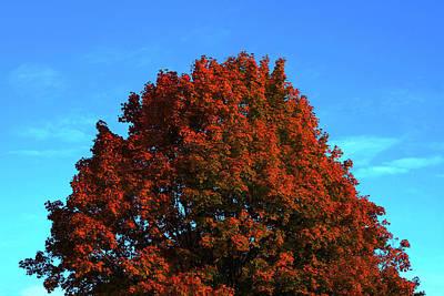 Photograph - Leaves by Dragan Kudjerski