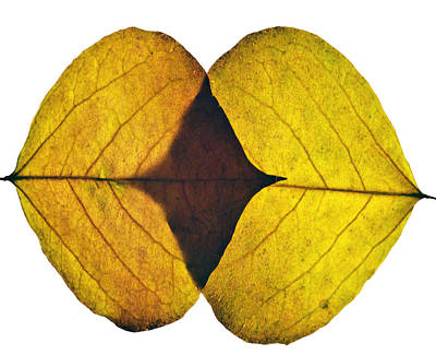 Photograph - Leaves Eight  by Ken Frischkorn