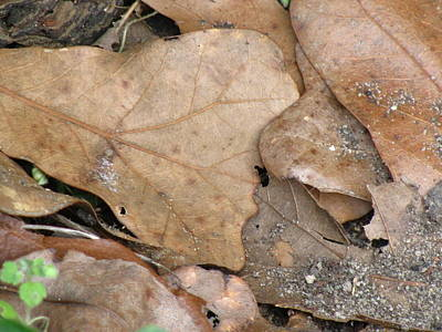 Wall Art - Photograph - Leaves by Evelyn Haye
