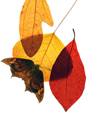 Photograph - Leaves Fifteen  by Ken Frischkorn