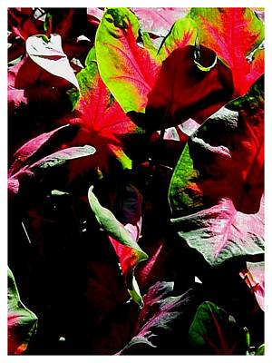 Photograph - Leaves by Frank Wickham