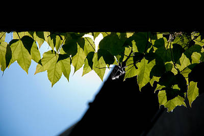 Sky Photograph - Leaves Of Eaves by Heidi Reyher