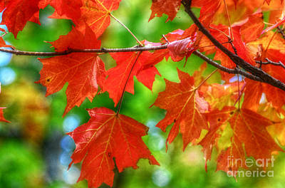 Autumn Peggy Franz Photograph - Leaves Of Red Autumn Vivid Colors by Peggy Franz