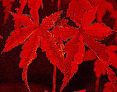 Photograph - Leaves Of Red by Kathy Sampson