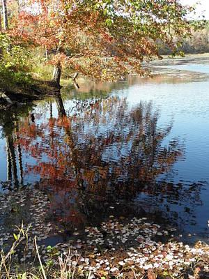 Leaves Of Reflections Art Print by Kim Galluzzo Wozniak