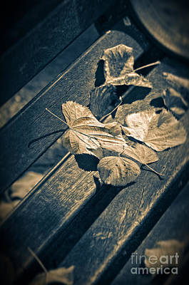Photograph - Leaves On Bench by Silvia Ganora