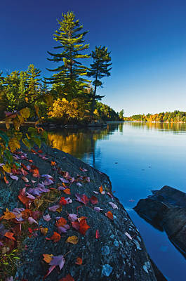 Killarney Provincial Park Photograph - Leaves On Rock, Killarney Provincial by Mike Grandmailson