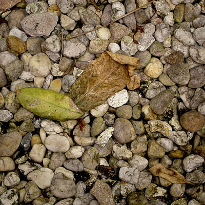 Photograph - Leaves On The Rocks by David Coblitz