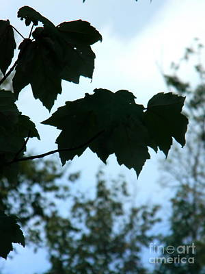 Photograph - Leaves Silhouette by Utopia Concepts