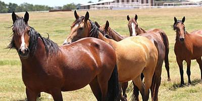 Photograph - Legendary Mustang by Elizabeth Hart