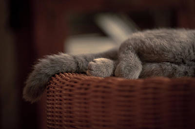 Legs And Tail Of A Sleeping Cat Art Print by Light Thru My Lens Photography