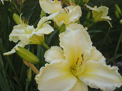 Lemon Daylilies Art Print by Bonnie Goedecke