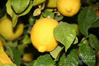 Photograph - Lemons Beautiful Lemons by Amelia Painter