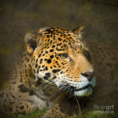 Target Threshold Nature Rights Managed Images - Leopard Royalty-Free Image by Betty LaRue