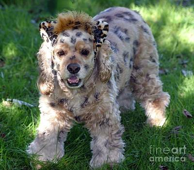 Photograph - Leopard Dog by Living Color Photography Lorraine Lynch