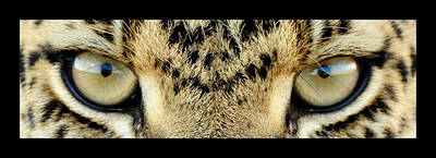 Leopard Eyes Print by Sumit Mehndiratta