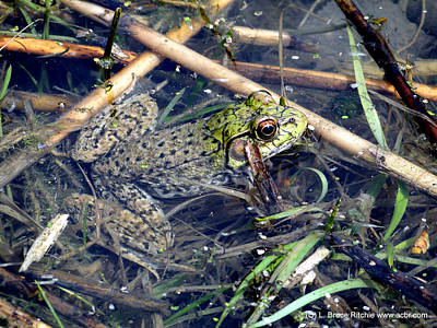 Mixed Media - Leopard Frog by Bruce Ritchie