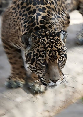 Leopard  Art Print by Gouzel -