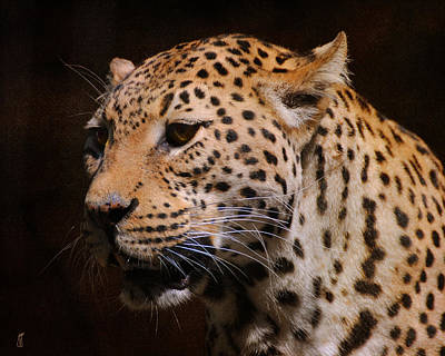 Cat Art Photograph - Leopard IIi by Jai Johnson