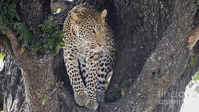 Photograph - Leopard by Mareko Marciniak