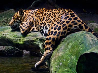 Photograph - Leopard Siesta by Chua  ChinLeng