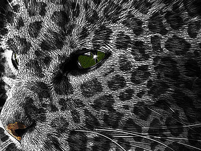 Leopard Within Art Print