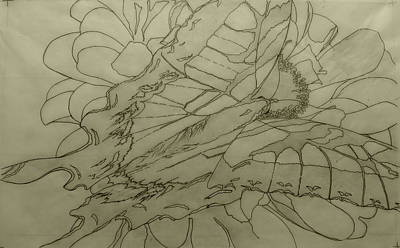 Drawing - Lepidoptery - Pencil Sketch - Wip by Joel Deutsch