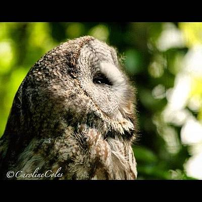 Ornithology Photograph - Let There Be Light! #owl #birdlover by Caroline Coles