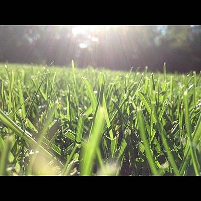 Martini Wall Art - Photograph - Let Yourself Shine #grass#green#sunshine by Ally De Martini