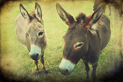 Donkey Digital Art - Let's Chat by Laurie Search