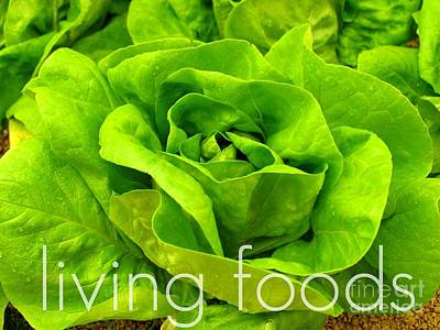 Lettuce Living Raw Foods Art Print by Sacred  Muse