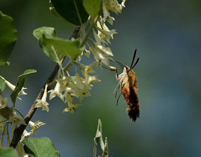 Flying Hummingbird Wall Art - Photograph - Levitation by Susan Capuano