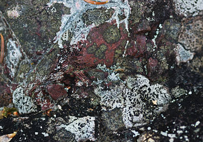 Lichen Photograph - Lichen Abstract II by Susan Capuano