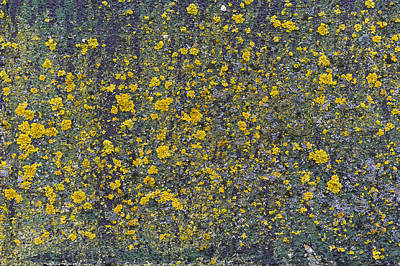 Photograph - Lichen On Warehouse Wall by Gary Eason