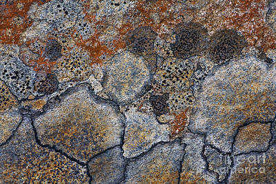 Abstract Forms Photograph - Lichen Pattern Series - 4 by Heiko Koehrer-Wagner