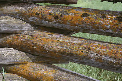 Lichens Growing On A Corral Fence Print by Stephen Sharnoff