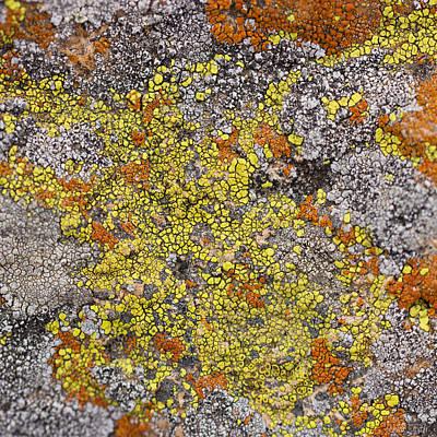 Lichens Art Print by Heidi Smith