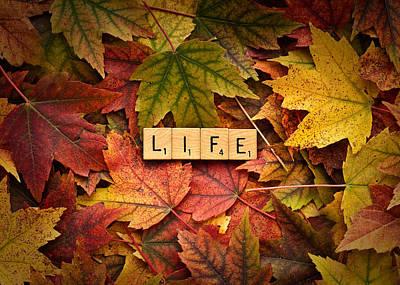Photograph - Life-autumn by  Onyonet  Photo Studios